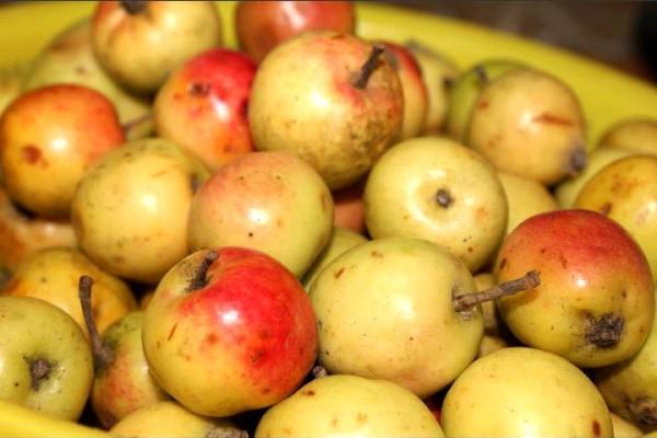 Cách làm giấm táo mèo - Nguyên liệu để làm dấm táo mèo