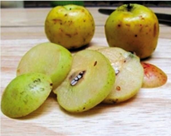 cách làm dấm táo - Bổ táo mèo ra rồi ngâm với nước muối