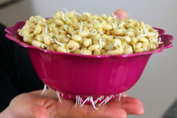 Cách làm giá đõ tương đơn giản tại nhà - an toàn vệ sinh thực phẩm
