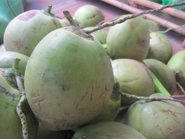 Dừa xiêm - cach lam sinh to dua
