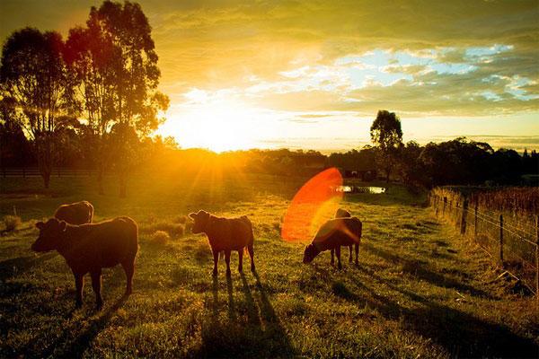 Nên chụp ảnh vào những lúc bình minh và những nơi có ánh sáng đẹp