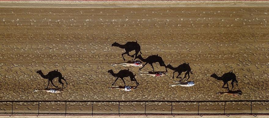 Cuộc đua lạc đà Al Marmoun là sự kiện thường niên được tổ chức tại Dubai, UAE và rất nổi tiếng trong khu vực.