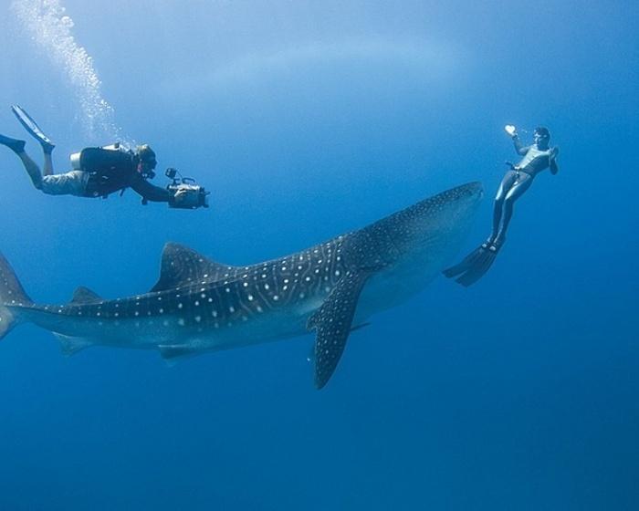 Lặn ở thiên đường Maldives