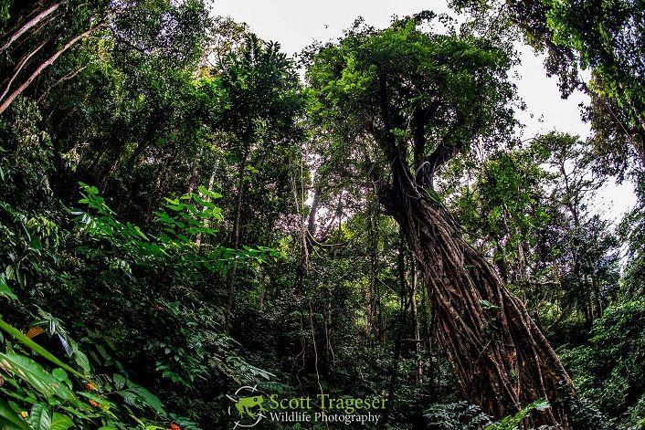 Rừng ở Côn Đảo chủ yếu là rừng nguyên sinh, thuộc hệ sinh thái nhiệt đới hải đảo