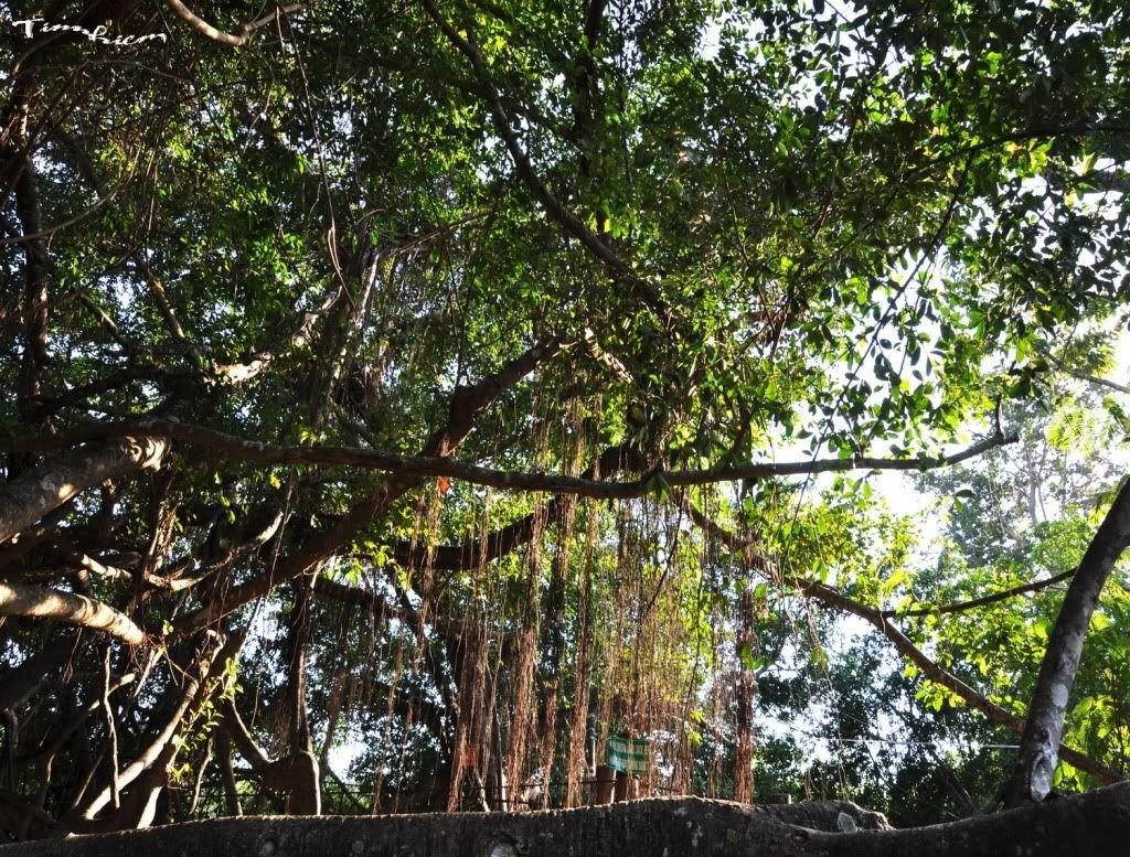 Hòa mình vào thiên nhiên nơi chim rừng, muông thú ca hát
