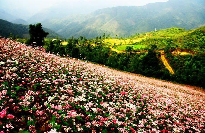 Để khi bước chân kẻ lữ hành lỡ đặt lên miền trời Đông Bắc - Ảnh: Duong Quang Tien