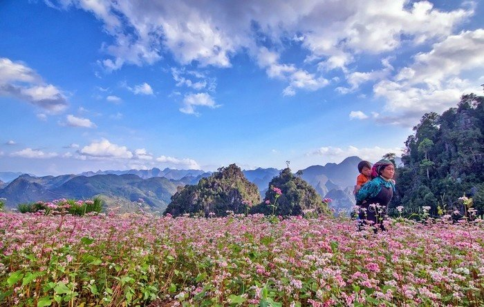 Hình ảnh cánh đồng hoa tam giác mạch cũng làm khách du lịch xao xuyến