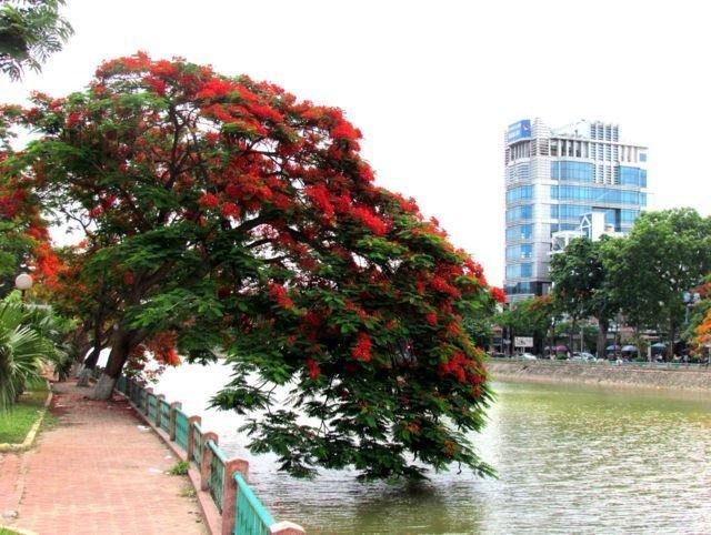 Hải Phòng: Lễ hội hoa phượng đỏ