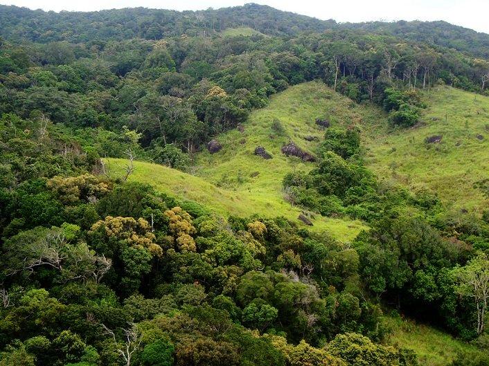 Càng lên cao theo dốc núi, cây cối càng trở nên xanh tươi hơn