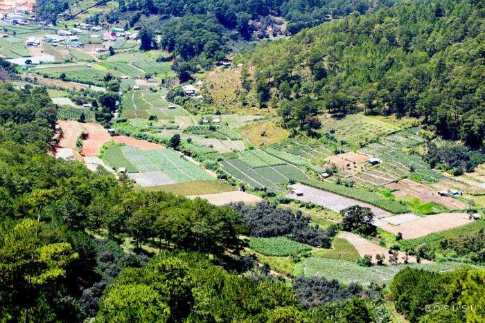 Những vườn rau ở Dran tựa như bức tranh thổ cẩm độc đáo