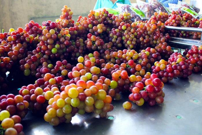 Những chùm nho Ninh Thuận