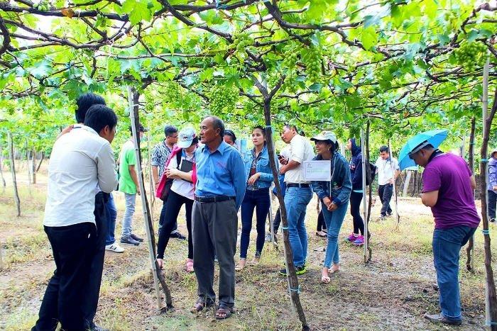 Dạo quanh vườn nho Ninh Thuận