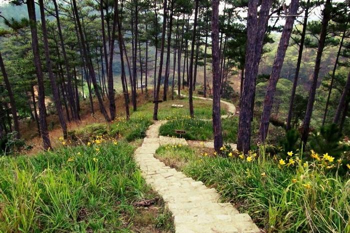 Lên lỏi giữa rừng thông xanh tìm về làng Cù Lần thơ mộng -