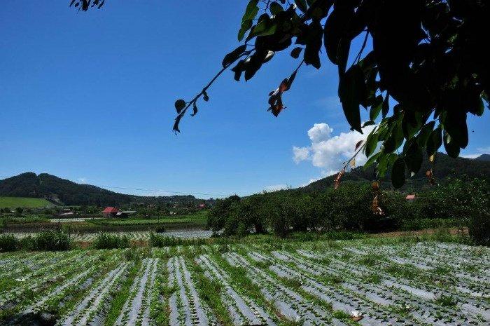 Thị trấn Dran-Vườn rau xanh mát