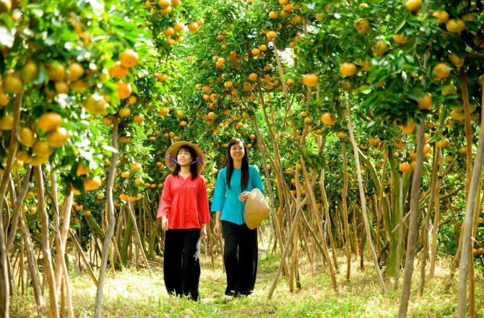 Vườn quýt Phong Điền