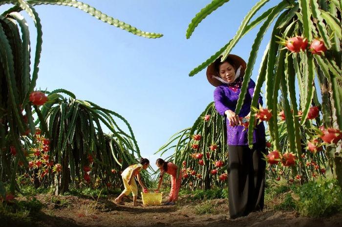 Thanh Long Tam Bình