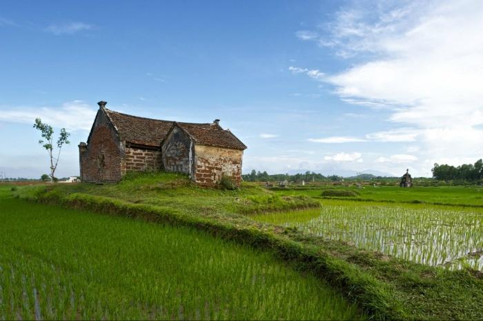 Làng cổ Đường Lâm-Đồng lúa xanh mơn mởn