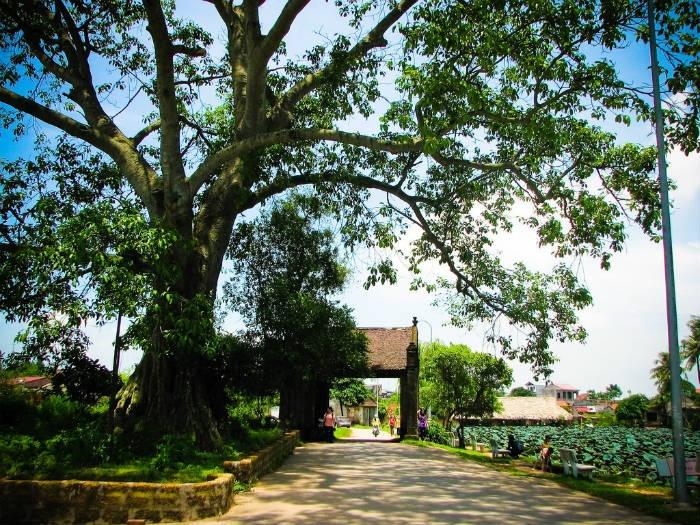 Làng cổ Đường Lâm-Đường vào làng cổ Đường Lâm rợp bóng cây xanh