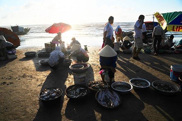 Những mẻ cá tươi ngon là quà tặng của biển Hải Hòa