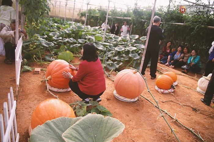 Khu vườn của ông Lê Hữu Phan ở số 50 Hồ Xuân Huơng (phường 9, TP. Đà Lạt, Lâm Đồng)