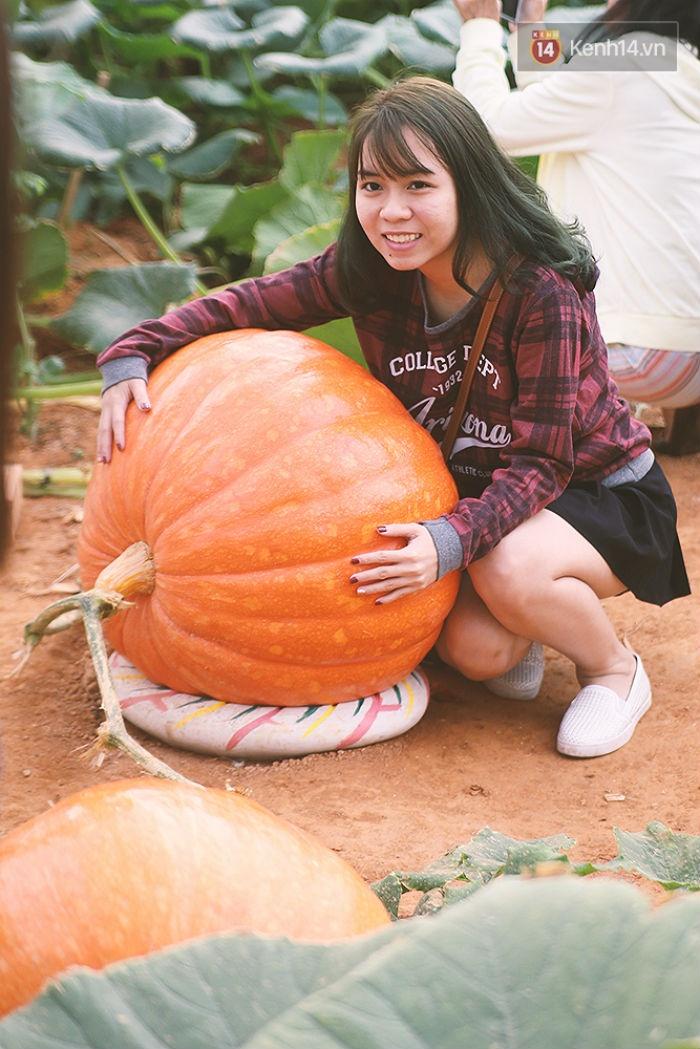 Những bạn trẻ du lịch đến Đà Lạt đều ghé qua đây một lần để được chụp ảnh ôm trọn quả bí khổng lồ trong vòng tay.