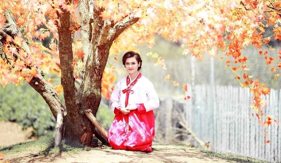 Hà Nội - Nhiều cây giả đưa vào xen với cây thật