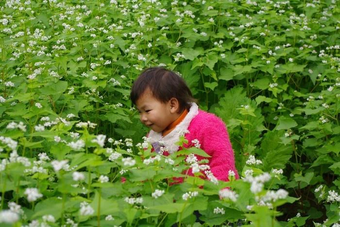 Hình ảnh một bé gái người Thái trong vườn tam giác mạch tại bản Áng cách trung tâm thị trấn 5 km.