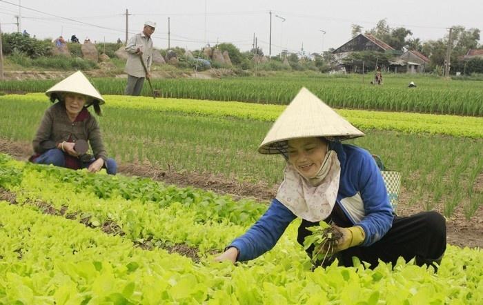 Nụ cười của người nông dân trên ruộng rau Ngọc Lãng