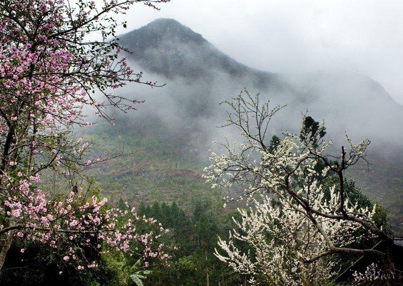 Những mùa hoa càng làm núi đồi Tây Bắc thêm quyến rũ