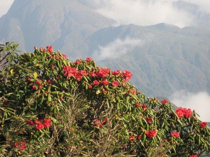 Sắc hoa đỗ quyên khiến người leo núi bớt đi phần mệt mỏi
