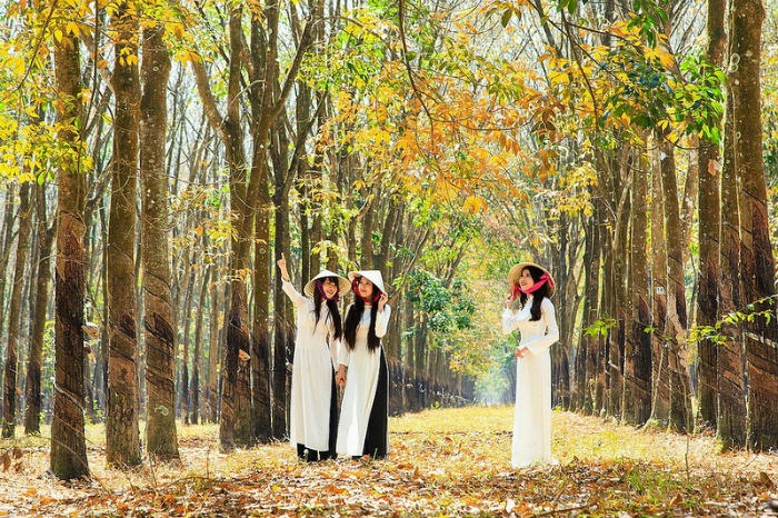 Đẹp diệu kỳ những khu rừng khắp đất Việt mùa thay lá
