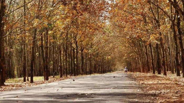 Khung cảnh mùa lá đổ đẹp tựa trời Tây