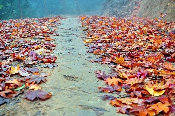 Rừng phong Chế Tạo mùa thay lá đẹp đến ngỡ ngàng