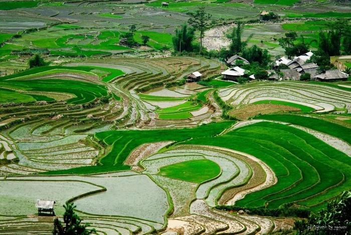 Vùng đất của lúa