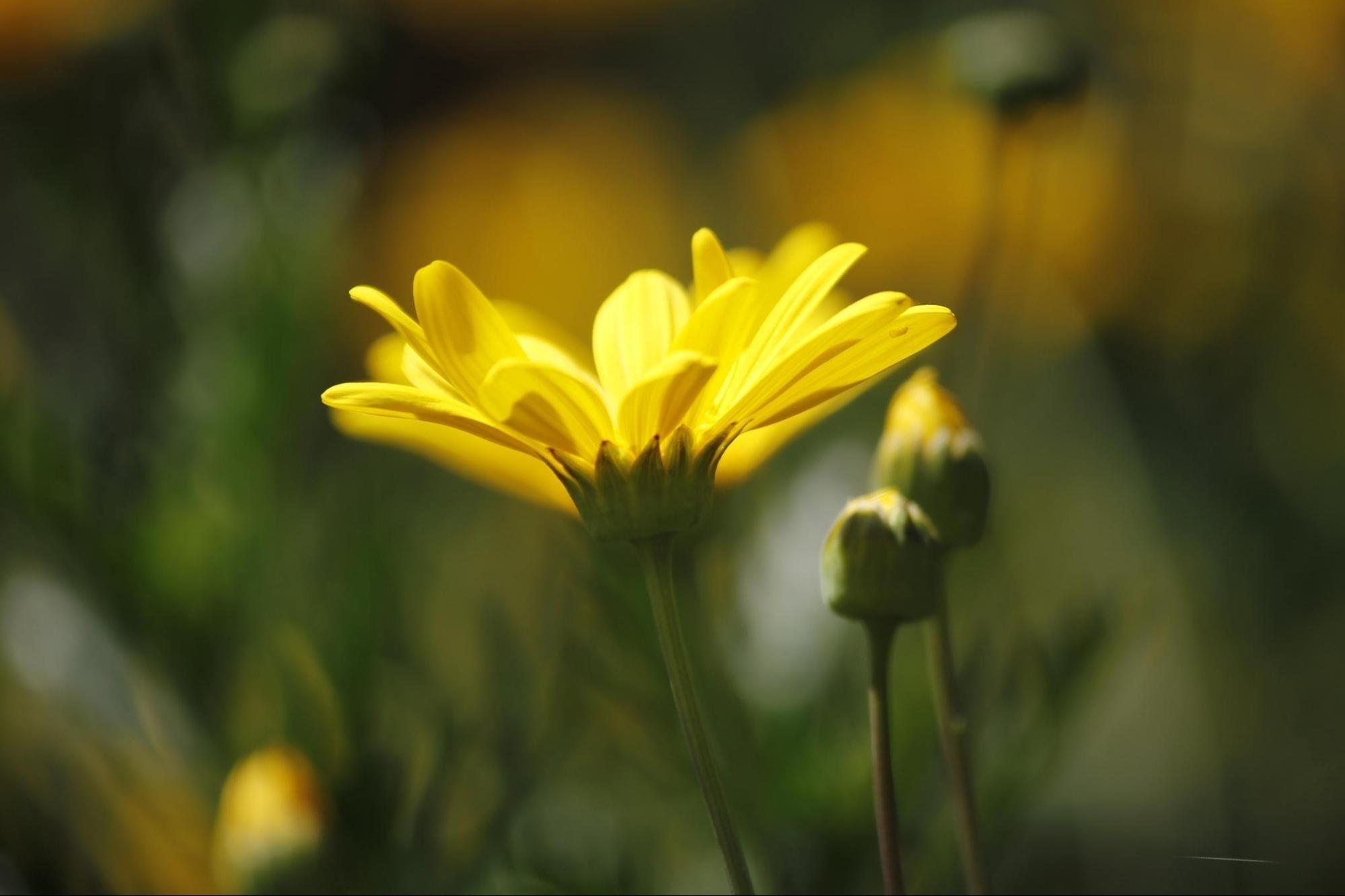 Hương sắc hoa cỏ Đà Lạt