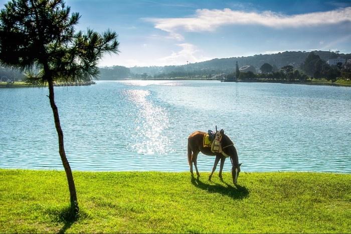 Lững lờ một chút ngựa bên bờ hồ Đà Lạt