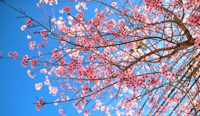 Đà Lạt - Những bông hoa bung tỏa hương sắc