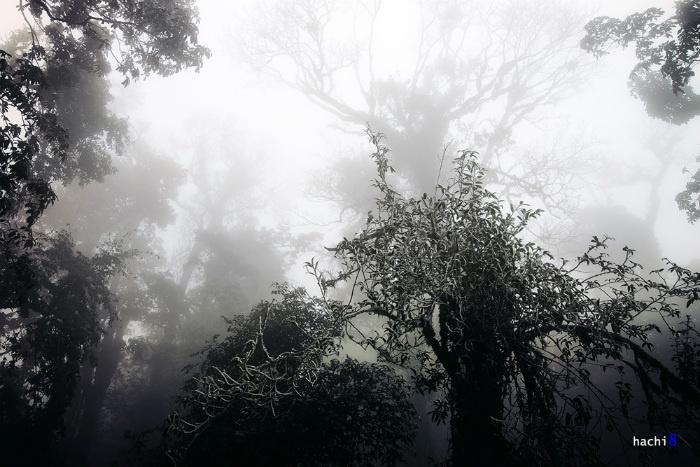 Khu rừng Nhìu Cồ San trở nên ma mị hơn với những thân cây cổ thụ trắng thếch vì băng giá.