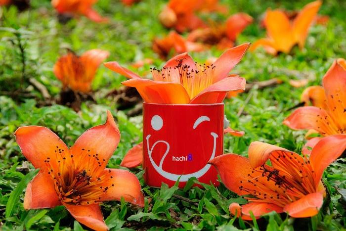 Hoa gạo Hà Nội đẹp rực rỡ qua ống kính nhiếp ảnh gia