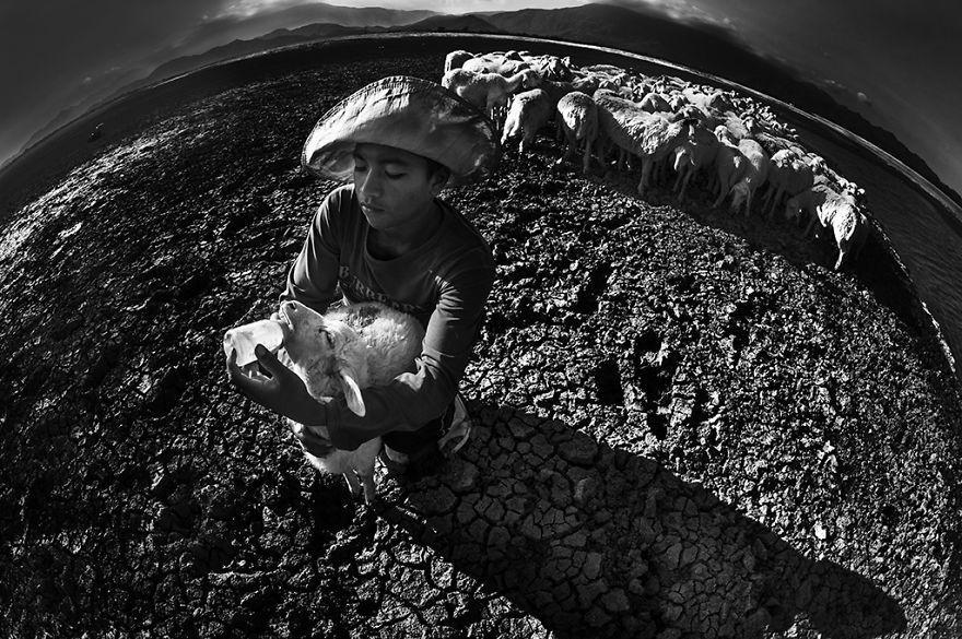 Bức ảnh trên ghi lại khoảnh khắc một cậu bé mục đồng đang cho cừu ăn bằng tay. Hạn hán tại Ninh Thuận khiến việc chăn nuôi gia súc của người Chăm nơi đây gặp nhiều khó khăn.