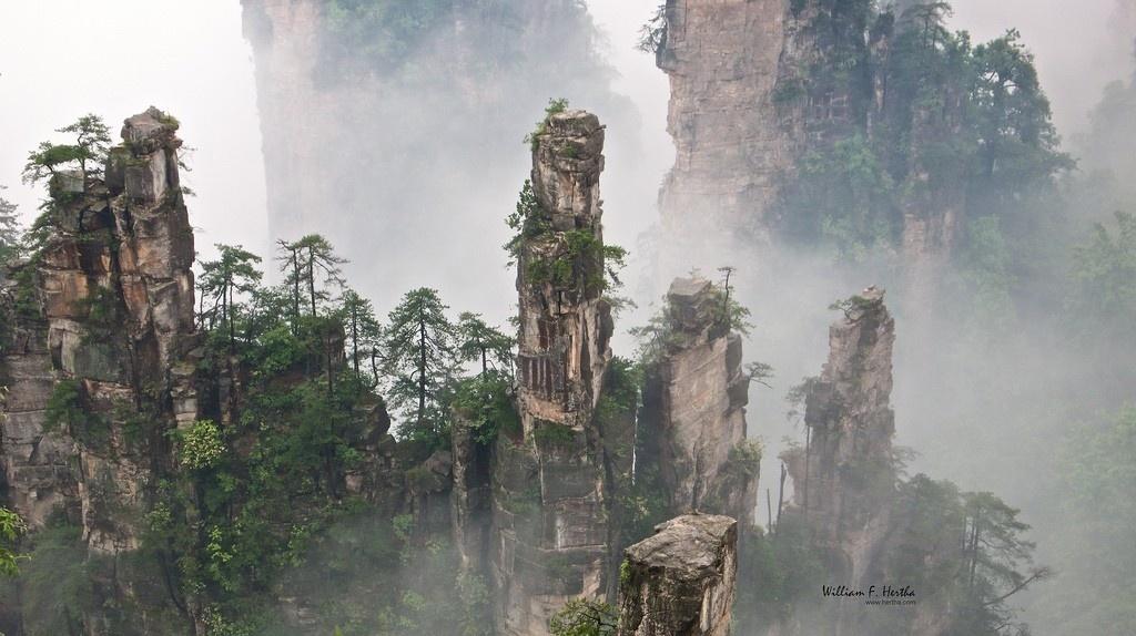 Những cây chông khổng lồ vươn lên trời Tianzi