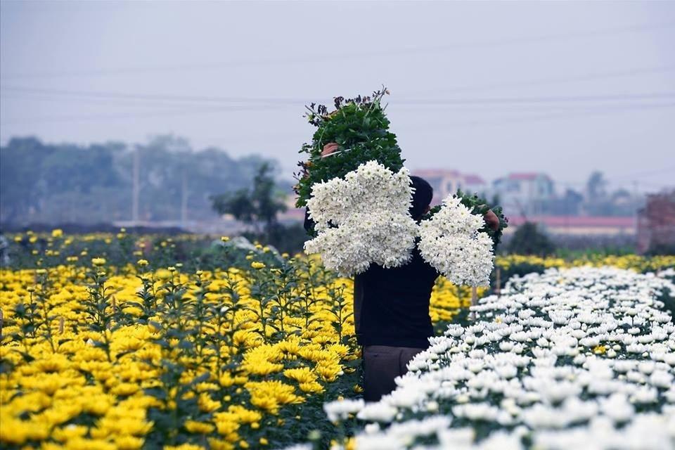 Mê Linh bunh nở cùng những loài hoa