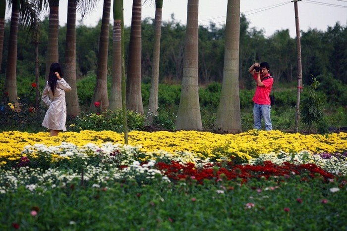 Hòa mình cùng sắc màu rực rỡ của làng hoa Xuân Quan