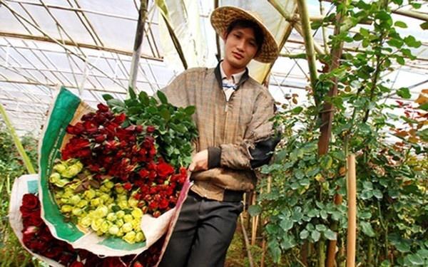 Thử làm người thu hoạch hoa Đà Lạt