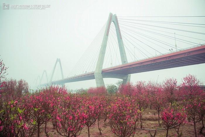 Khi vườn đào Nhật Tân ngập tràn trong sương sớm