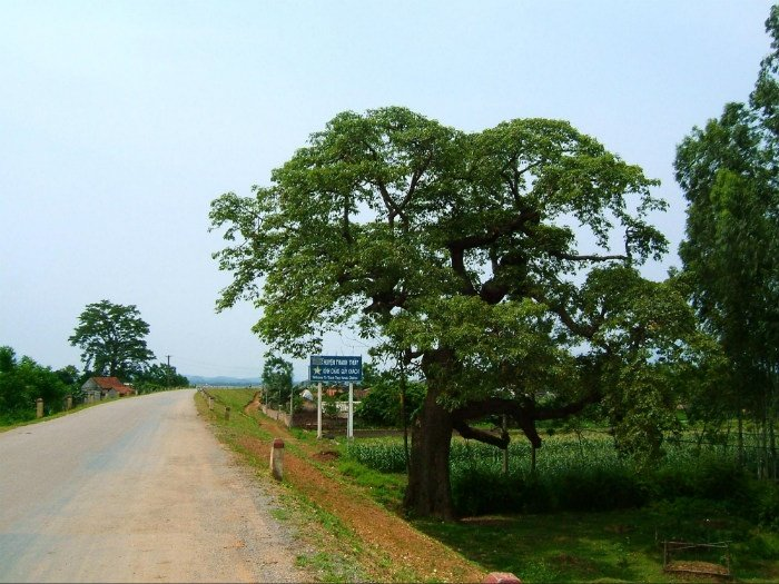 Những con đường vắng bên ruộng đồng Phú Thọ
