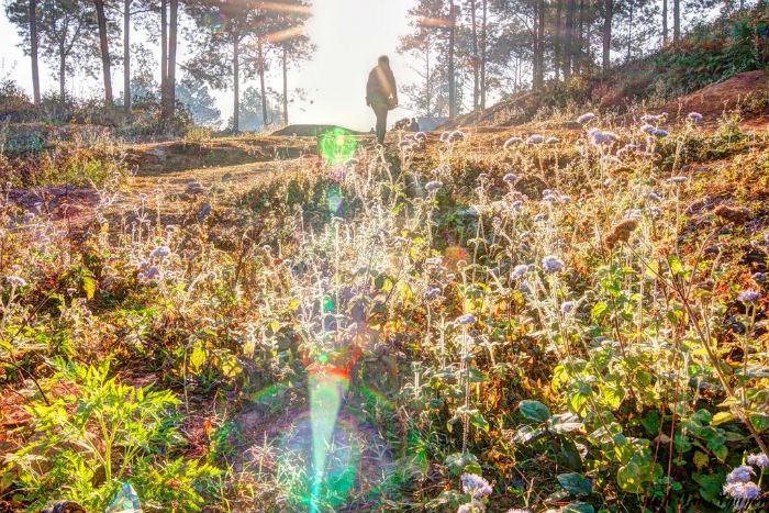 Một khoảnh khắc ma mị ở rừng thông Bản Áng