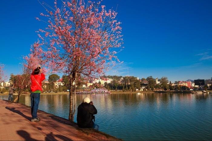 Đà Lạt mùa xuân bên hồ Xuân Hương
