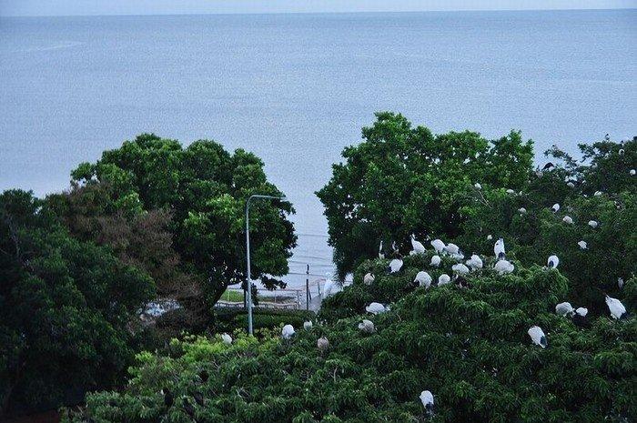 Vườn cò Bằng Lăng