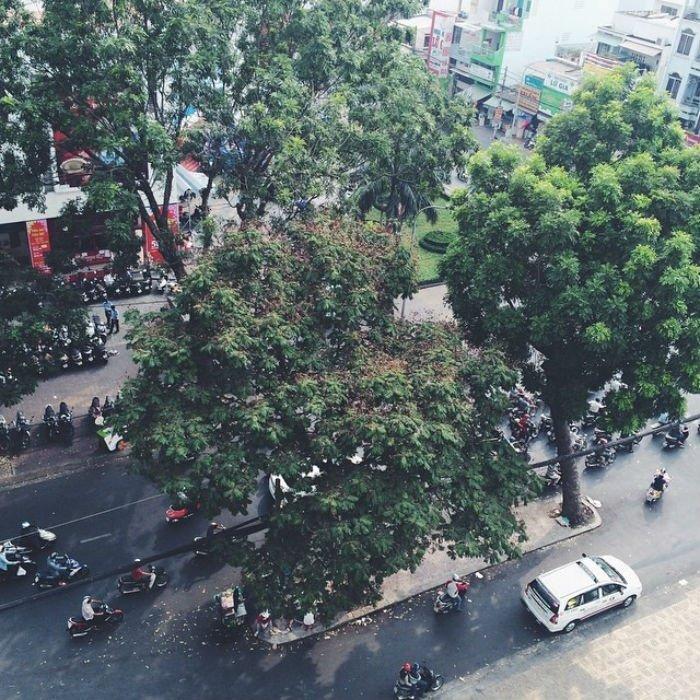 Một góc Sài Gòn ngày xuân